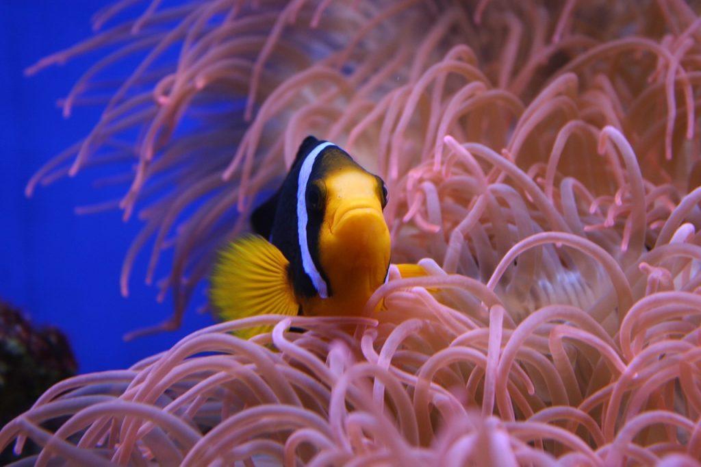 Aquarium mit Osmseanlage betreiben